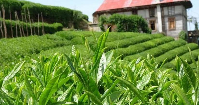 Azərbaycan çay idxalını 6 % artırıb