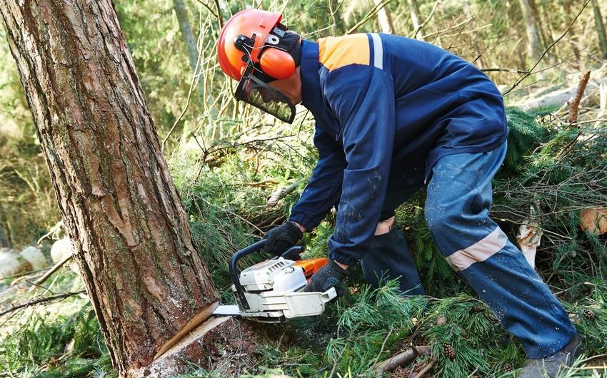 Qanunsuz ağac kəsməyə görə 74 cinayət işi başlanılıb