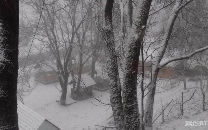 Qax rayonuna qar yağıb - FOTO - VİDEO