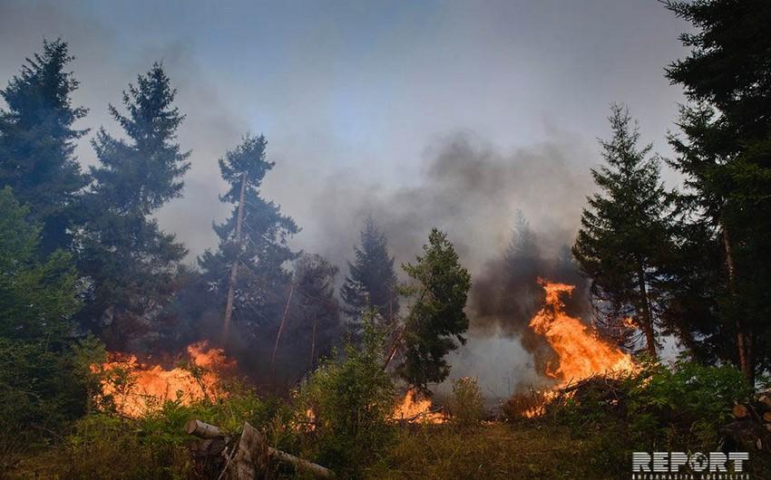 Oğuz meşəsində və Şahdağ Milli Parkında baş verən yanğın söndürülüb - RƏSMİ