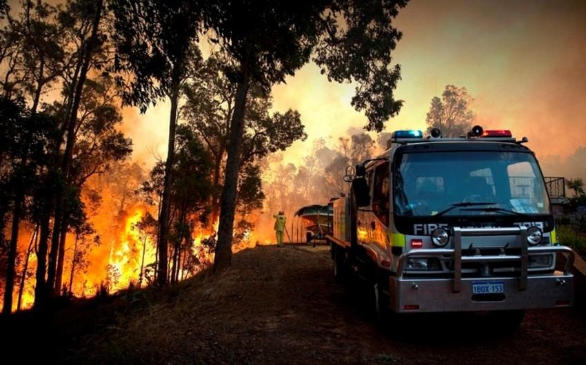 На юге Австралии бушуют лесные пожары