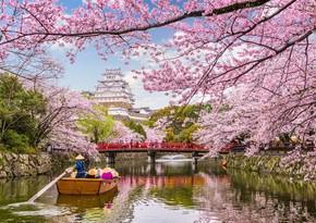 Tokioda sakura bir həftə tez çiçəklədi