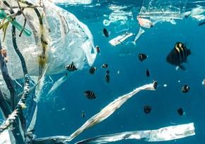 Ученые придумали микророботов для очистки вод от пластикового мусора