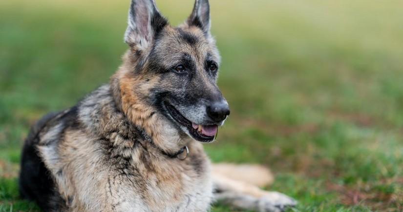 Джо Байден сообщил о смерти одной из своих собак
