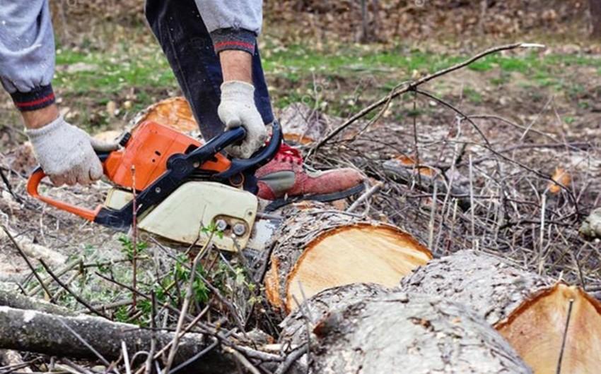 Bu il Azərbaycanda qanunsuz balıq tutmağa görə 93, ağac kəsmə faktı üzrə 35 cinayət işi başlanılıb