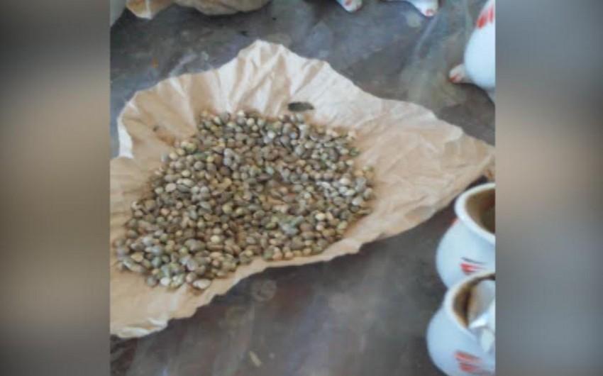 Nardaranda narkotik tərkibli bitkilərin kultivasiyası ilə məşğul olan şəxs tutulub