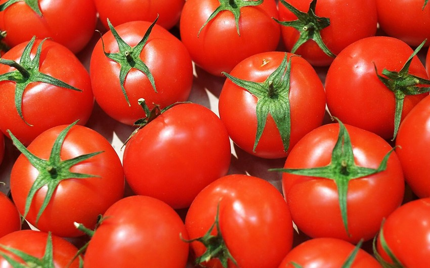 Россия увеличила квоту Турции на поставки томатов