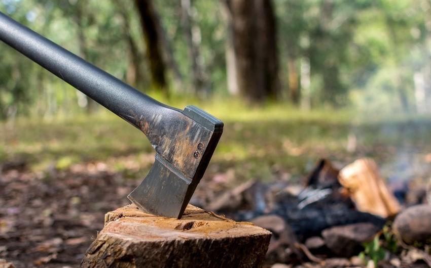 Мужчину оштрафовали на 15 тыс. манатов за незаконную вырубку деревьев в Баку