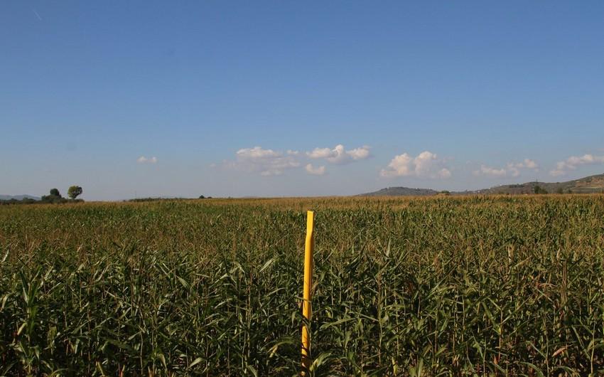 TAP-ın Albaniya və Yunanıstan hissəsində 85% torpaq bərpa edilib
