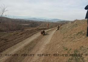 Участок дороги длиной 6-7 км из Физули в Шушу очищен от мин