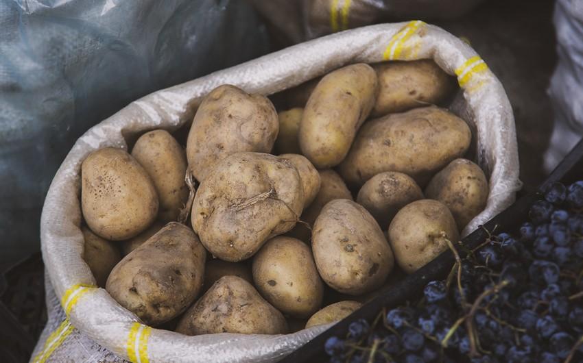 Belarus ilk dəfə Azərbaycandan kartof idxal edib