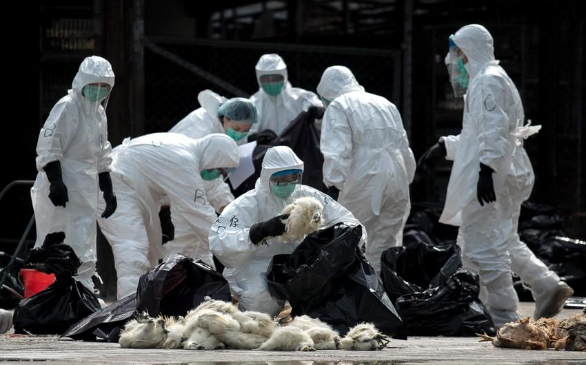 В Китае произошла вспышка птичьего гриппа
