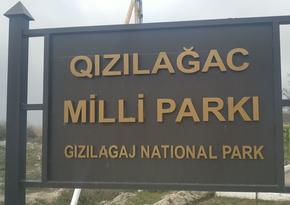 Qızılağac Milli Parkında reyd keçirilib