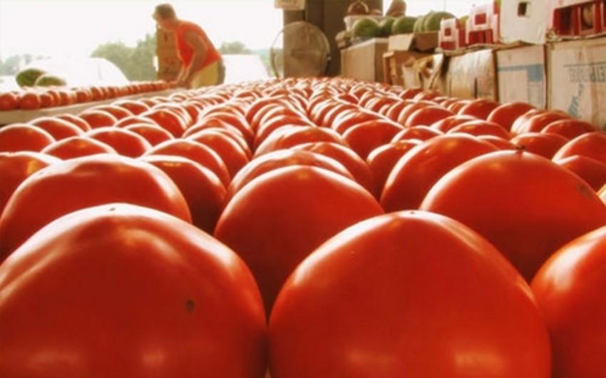 Rusiyanın Türkiyə pomidorlarına sanksiyasının tətbiqi müddəti açıqlanıb