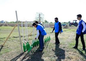 В рамках проекта Зеленый марафон прошла акция по посадке медоносных деревьев