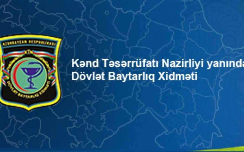 Dövlət Baytarlıq Nəzarəti Xidməti tender keçirir