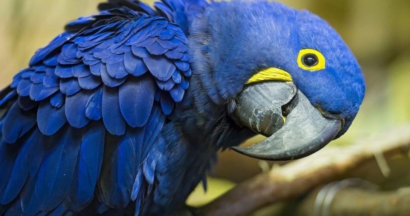 Гигантский попугай прервал тренировку сборной Бразилии