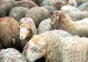 В Баку будет организована продажа жертвенных животных