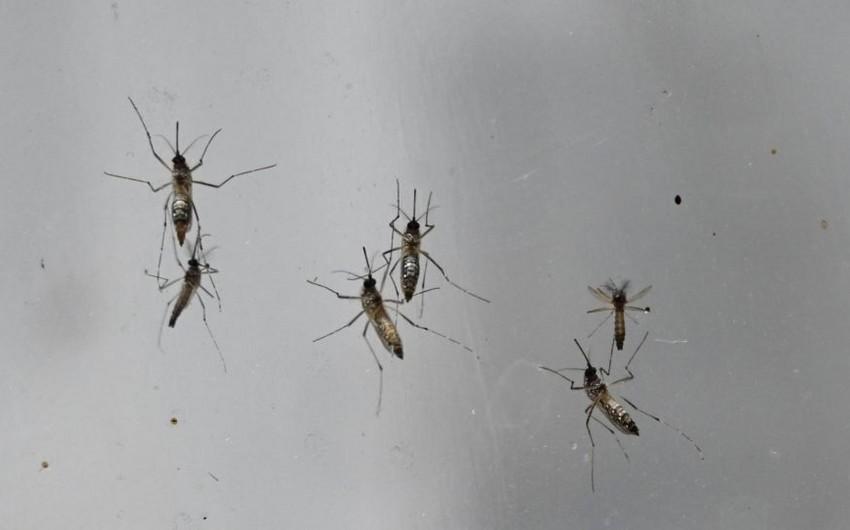Ağcaqanadlarkoronavirusu insanlar arasında yaya bilərmi?