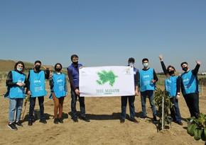 В Баку прошли акции по посадке деревьев в рамках проекта Республиканский зеленый марафон