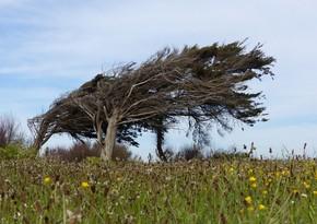 Сильный ветер и проливные дожди создали проблемы в Гекчае