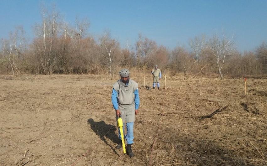 Cocuq Mərcanlıda 0,69 hektar ərazi tam təmizlənib