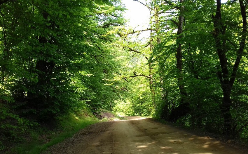 Иранская часть Гирканских лесов включена в Список всемирного наследия ЮНЕСКО