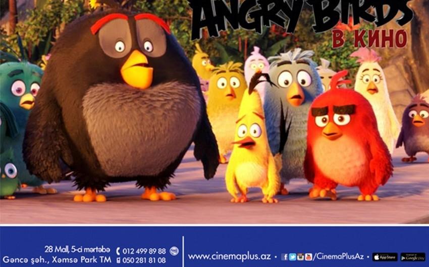 CinemaPlusda əfsanəvi mobil oyun Angry Birds kinoda cizgi filminin nümayişinə başlanıb - VİDEO