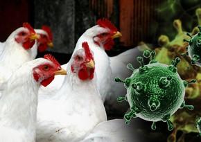 В Чехии зафиксировали вспышку птичьего гриппа