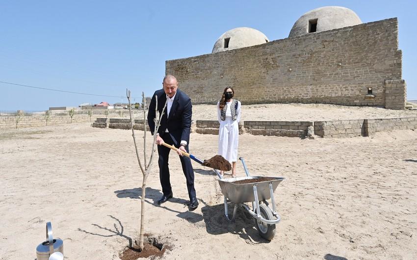 Prezident və xanımı Pirşağıda ağac əkiblər