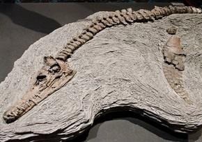 Мексиканские ученые обнаружили новый вид динозавра