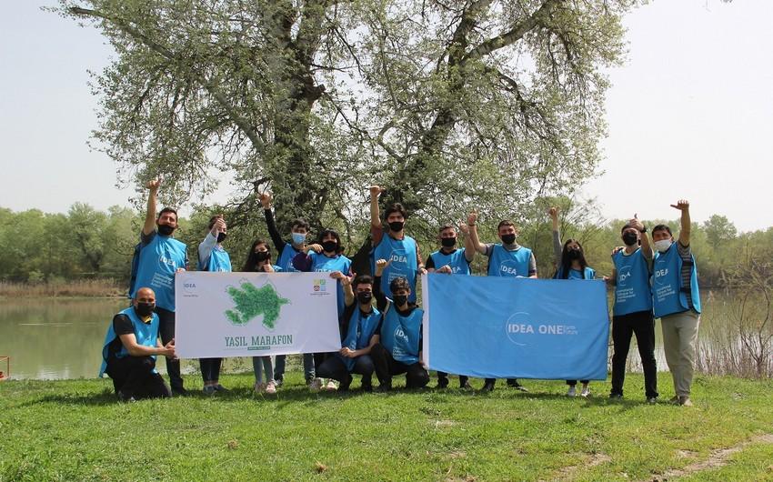 В рамках Зеленого марафона посажены медоносные деревья