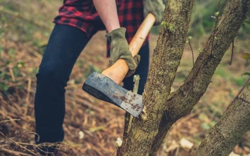 Sabirabadda ağacları kəsən cəzalandırıldı