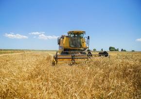 В Азербайджане продолжается уборка зерновых