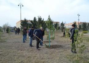AFFA plants over 50,000 trees