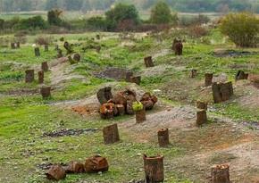 Ermənilər Laçında 1 milyon 511 min manatlıq qanunsuz ağac kəsiblər, cinayət işi açılıb