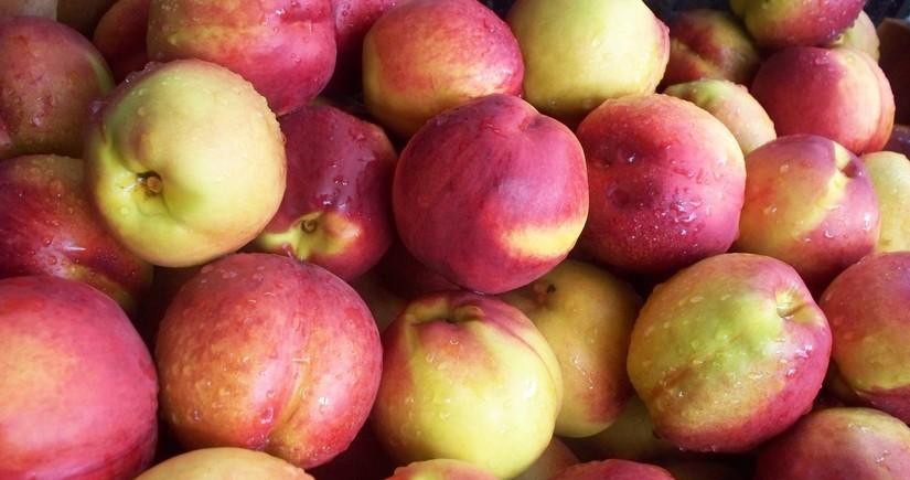 Rusiya Azərbaycana məxsus 19 ton nektarini geri qaytarıb