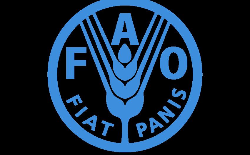 FAO Azərbaycanda 3 yeni layihə həyata keçirməyi planlaşdırır