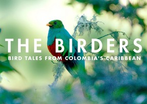 """The Birders: A Melodic Journey through Northern Colombia"""