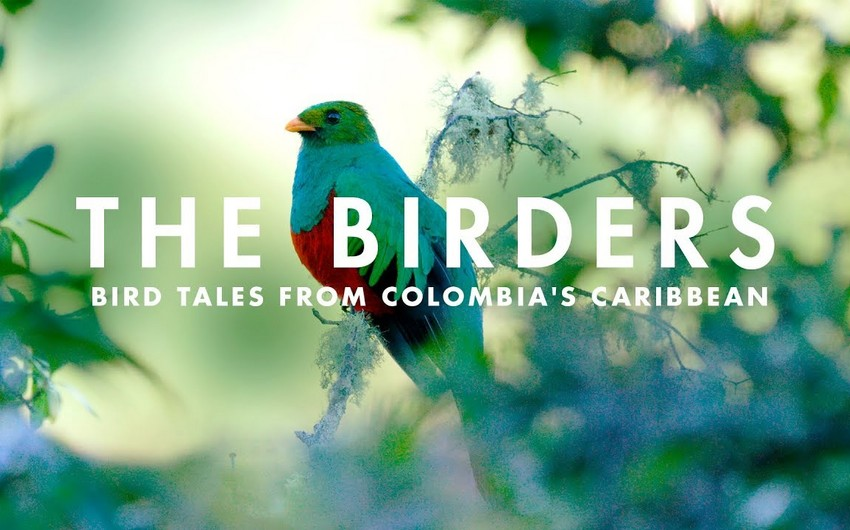 """""""The Birders: A Melodic Journey through Northern Colombia"""""""
