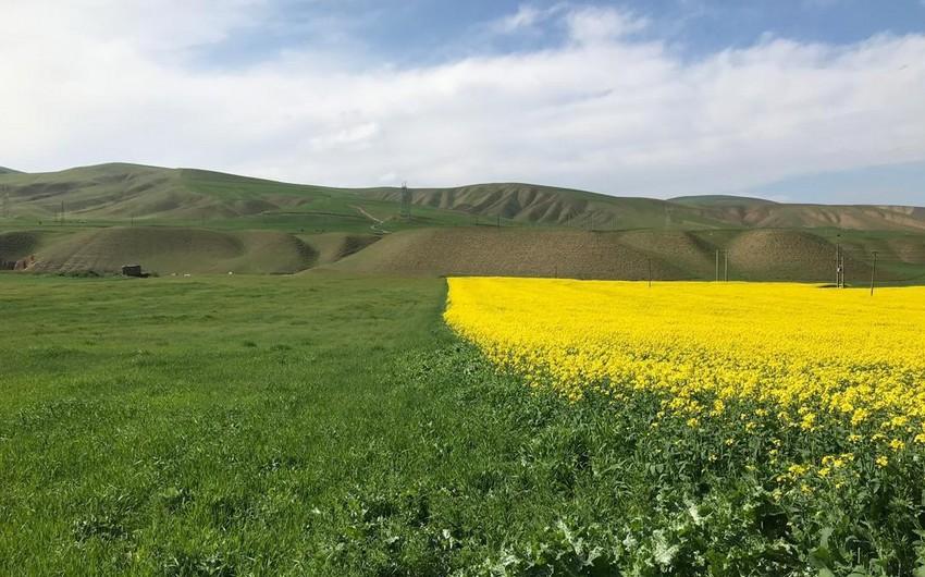 Азербайджанский клондайк: армяне должны возместить ущерб от эксплуатации месторождений в Карабахе