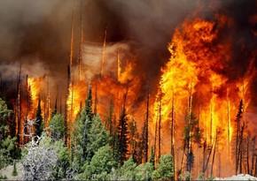ABŞ-da meşə yanğınları onlarla insanın həyatına son qoyub