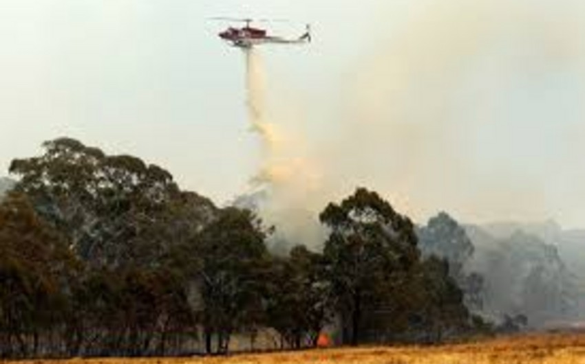 Avstraliyada meşə yanğınları nəticəsində onlarla ev məhv edilib