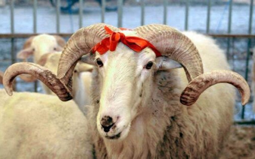 Control over butchers will be strengthened at Eid al-Adha