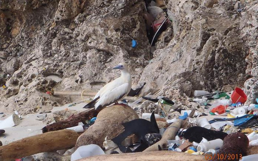 Ученые подсчитали, сколько пластикового мусора создало человечество