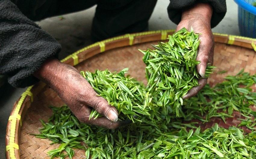 Azərbaycanın çay idxalı ixracını 7 dəfə üstələyib