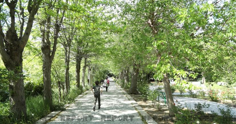 В Баку появится новый Ботанический сад