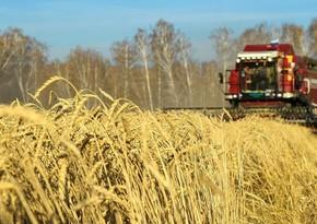 Global grain market may face shortage