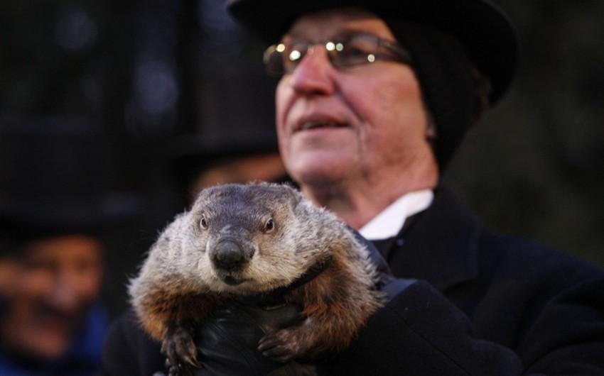 ABŞ-da Marmot Günü qeyd olunur
