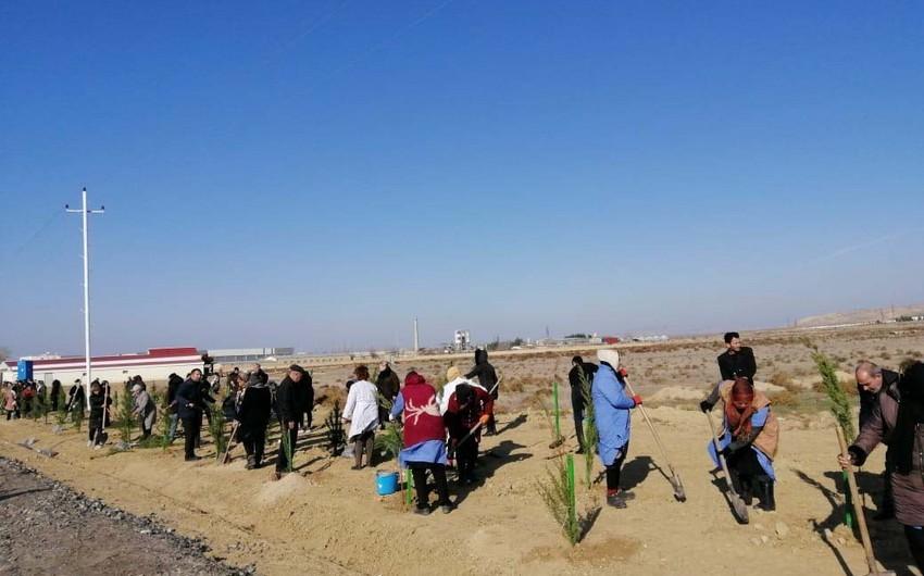 Payız ağacəkmə kampaniyası Şirvan şəhərində davam etdirilib